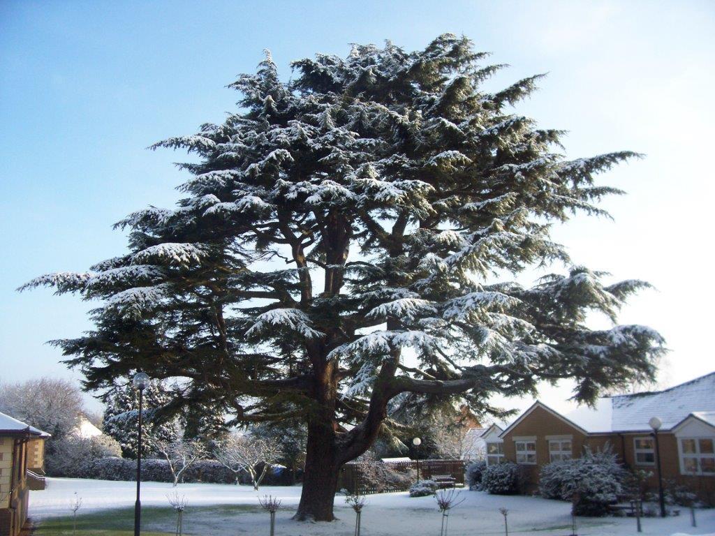 2012 feb snow (6)